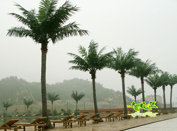 广场仿真椰子树