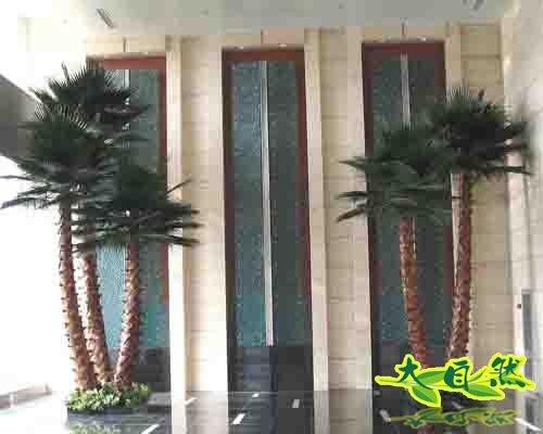 室内保鲜棕榈树